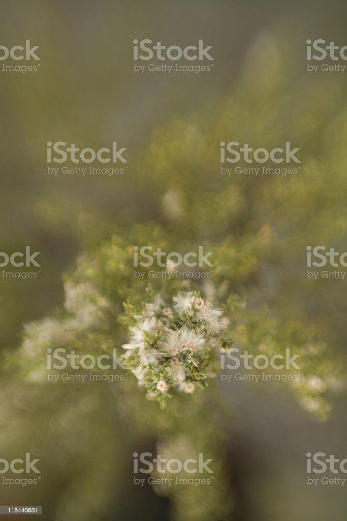 Plant Selective Focus stock photo