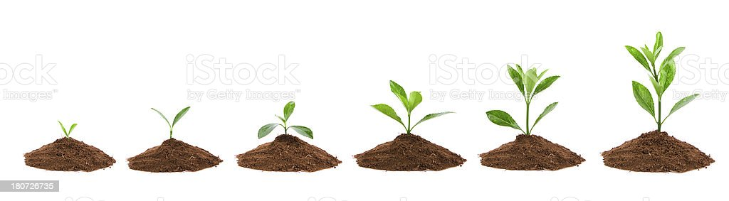 Plant Sequence in dirt isolate on white background stock photo