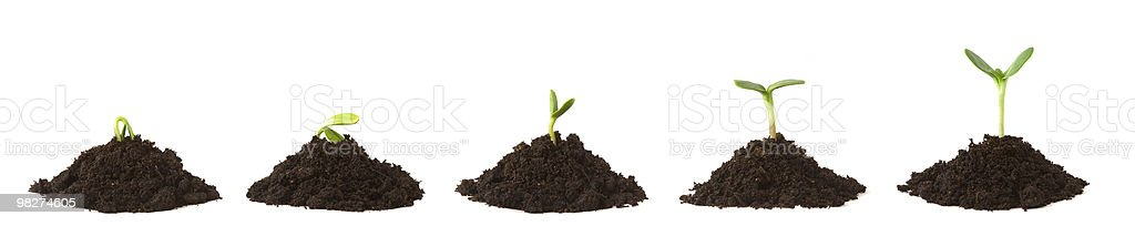 Plant Sequence on Dirt Piles stock photo