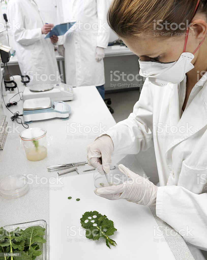Plant siences royalty-free stock photo