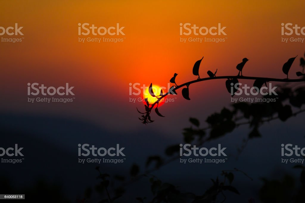 Plant silhouette against a sunset from a hill at Chikamagalur stock photo