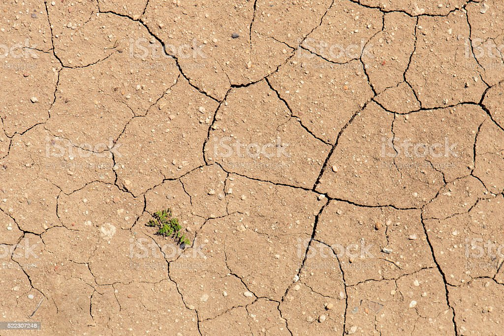 Plant strugges to grow in dry earth stock photo