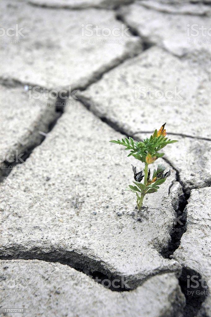 Растение Выживший пациент Стоковые фото Стоковая фотография