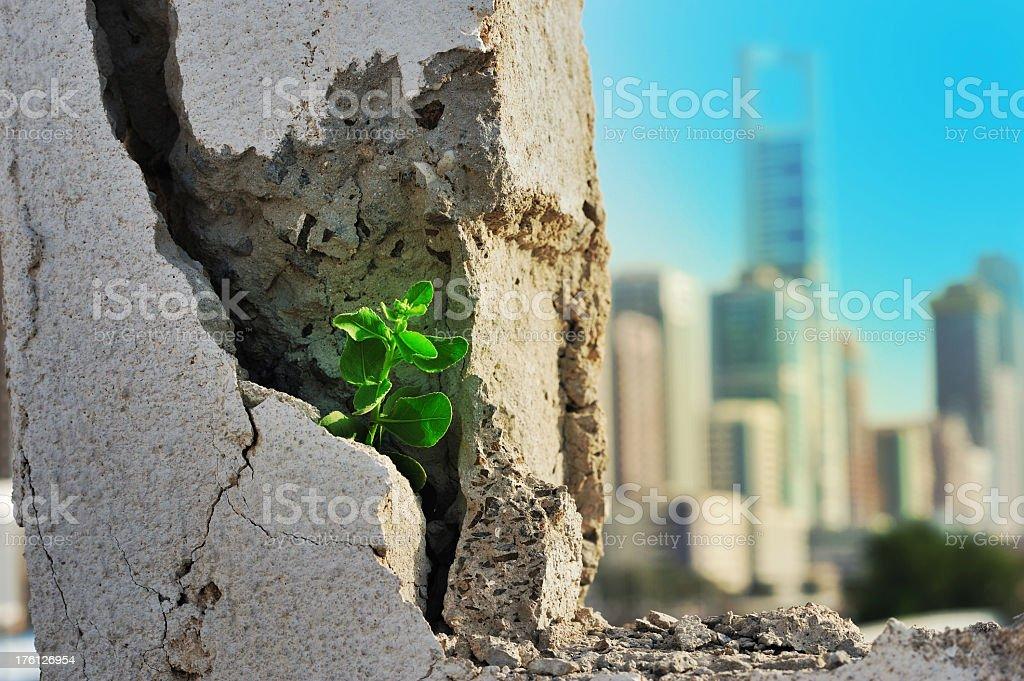 plant taking root on concrete stock photo