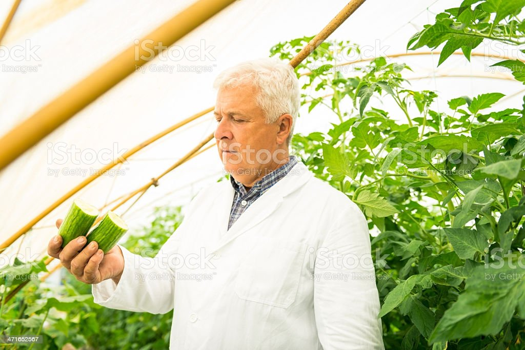 Plant Technologist royalty-free stock photo