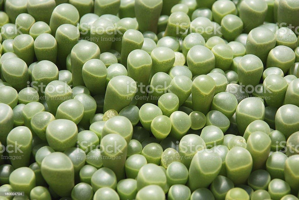 plant texture royalty-free stock photo
