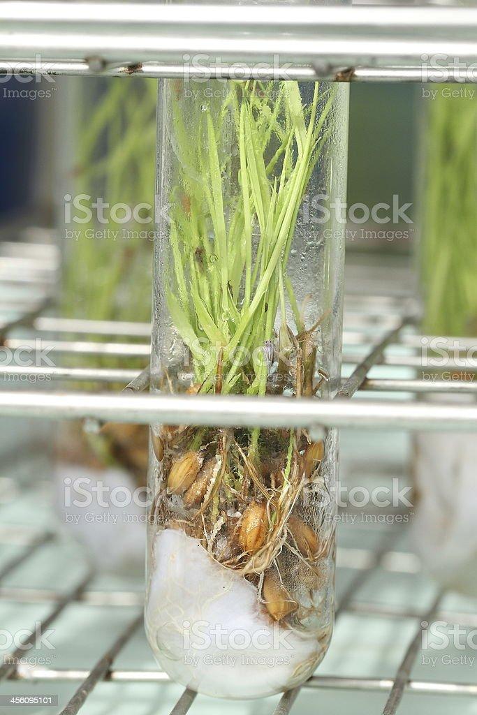 Plant tissue royalty-free stock photo
