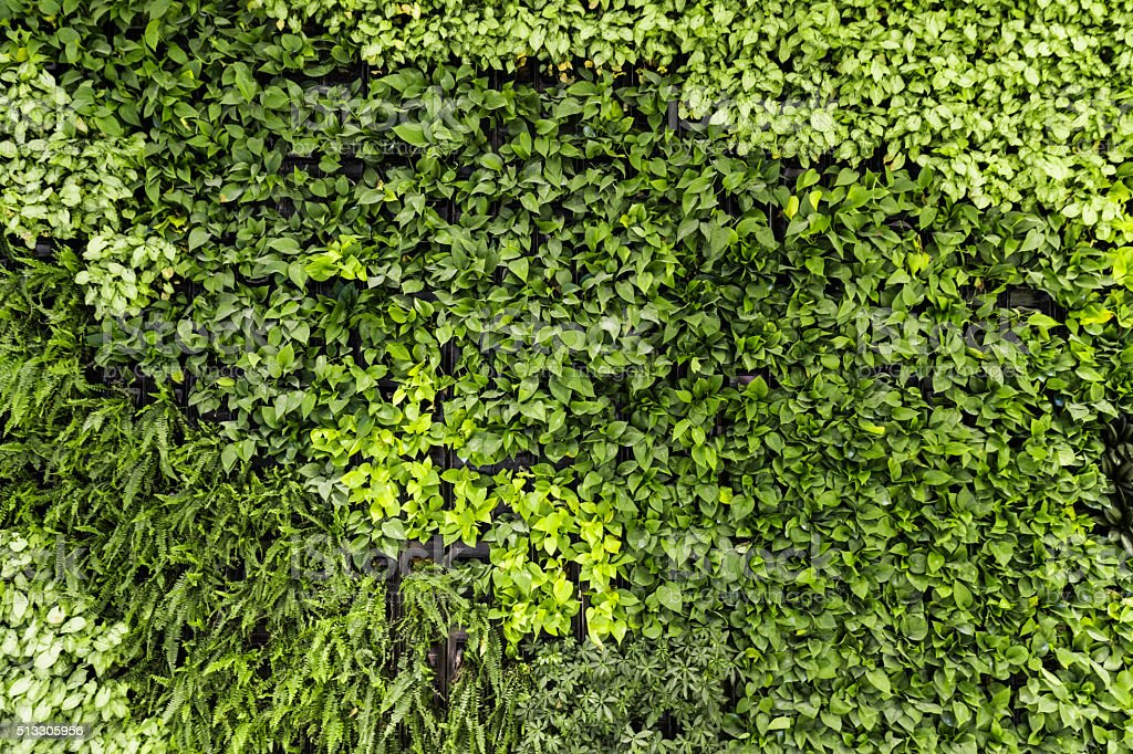 Plant wall stock photo