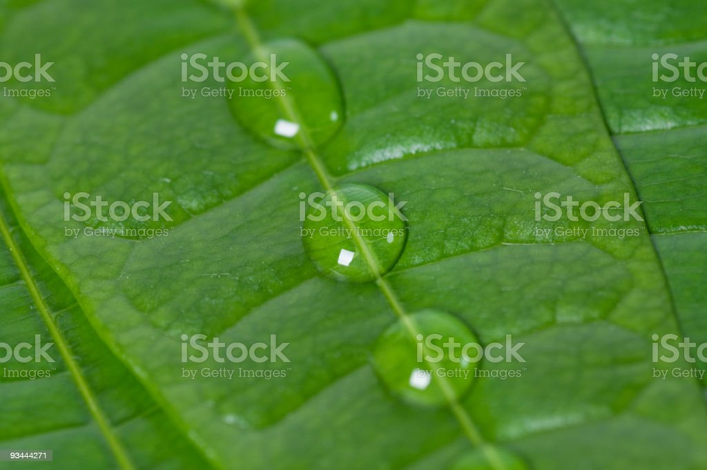 Plant Water Drops stock photo