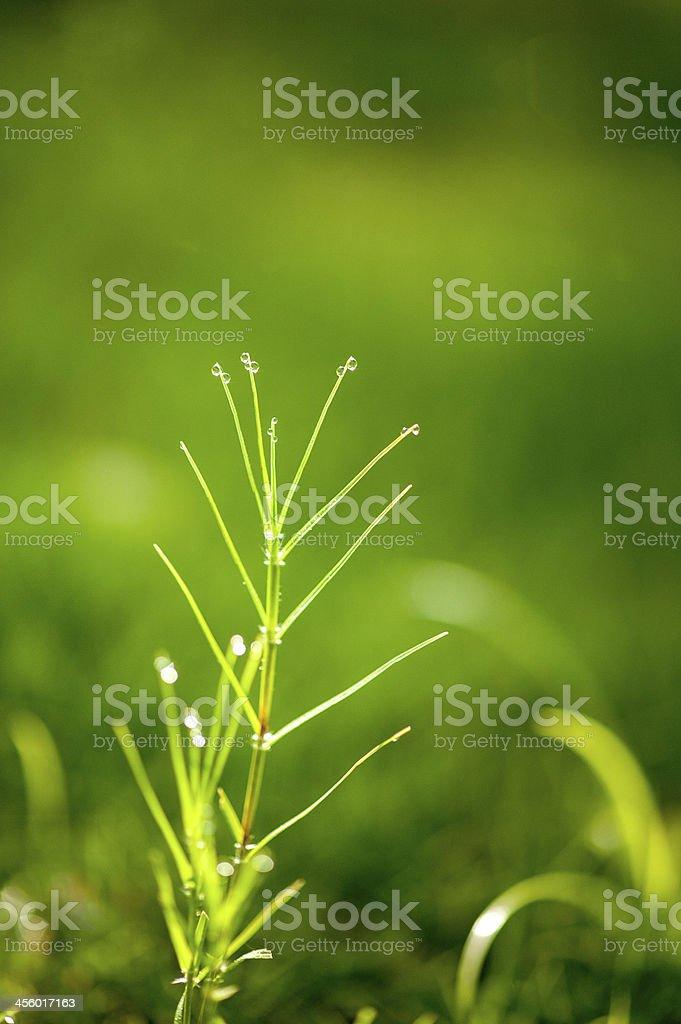 Plant with Dew stock photo