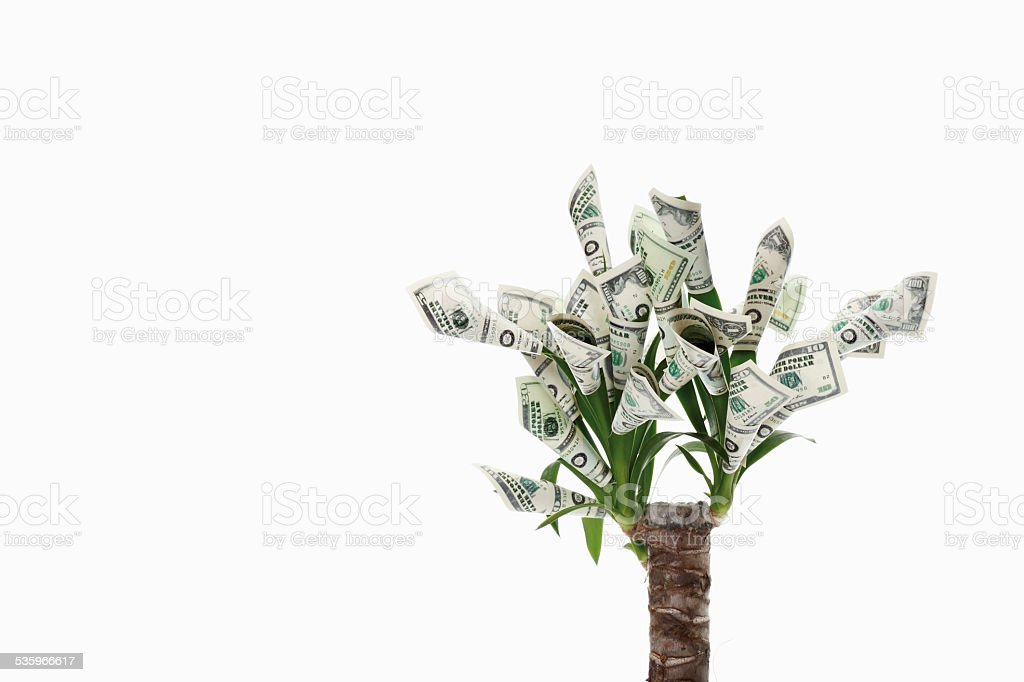 Plant with flowers made from dollar notes against white background stock photo