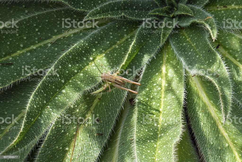Plant with Grasshopper. stock photo