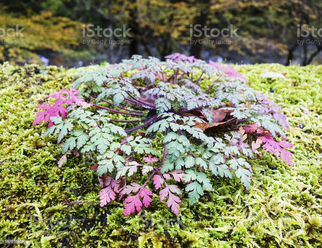 Plant With Red Leaves in a Wood stock photo