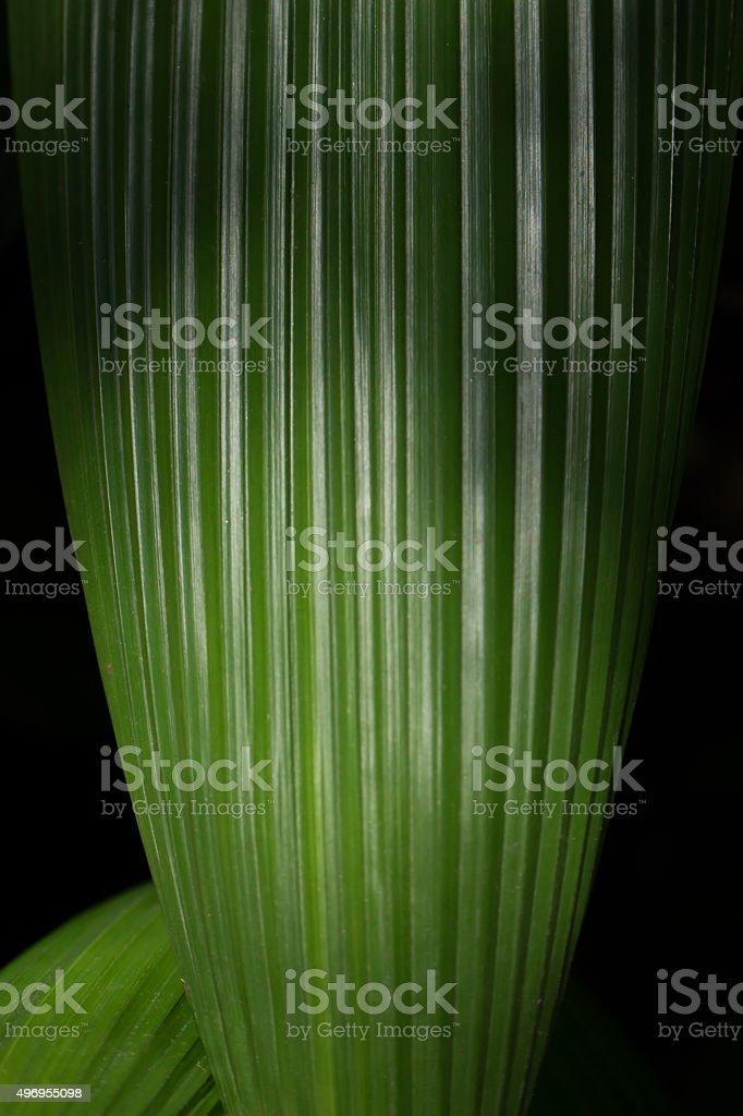 Planta no escuro stock photo
