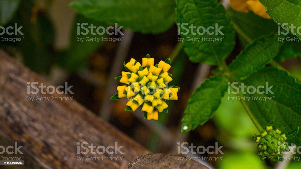 Planta silvestre stock photo