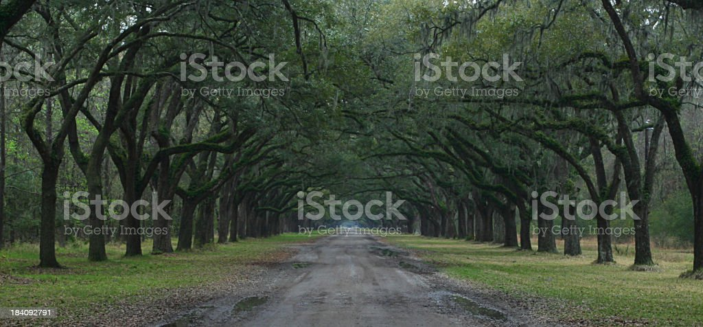Plantation entrance stock photo