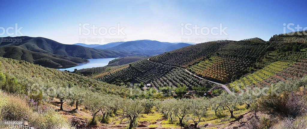 Plantation fields and lake near the village of La Pesga stock photo