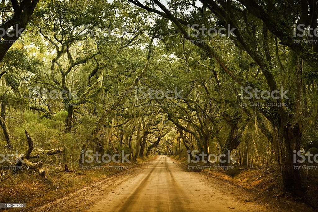Plantation forest dirt road royalty-free stock photo