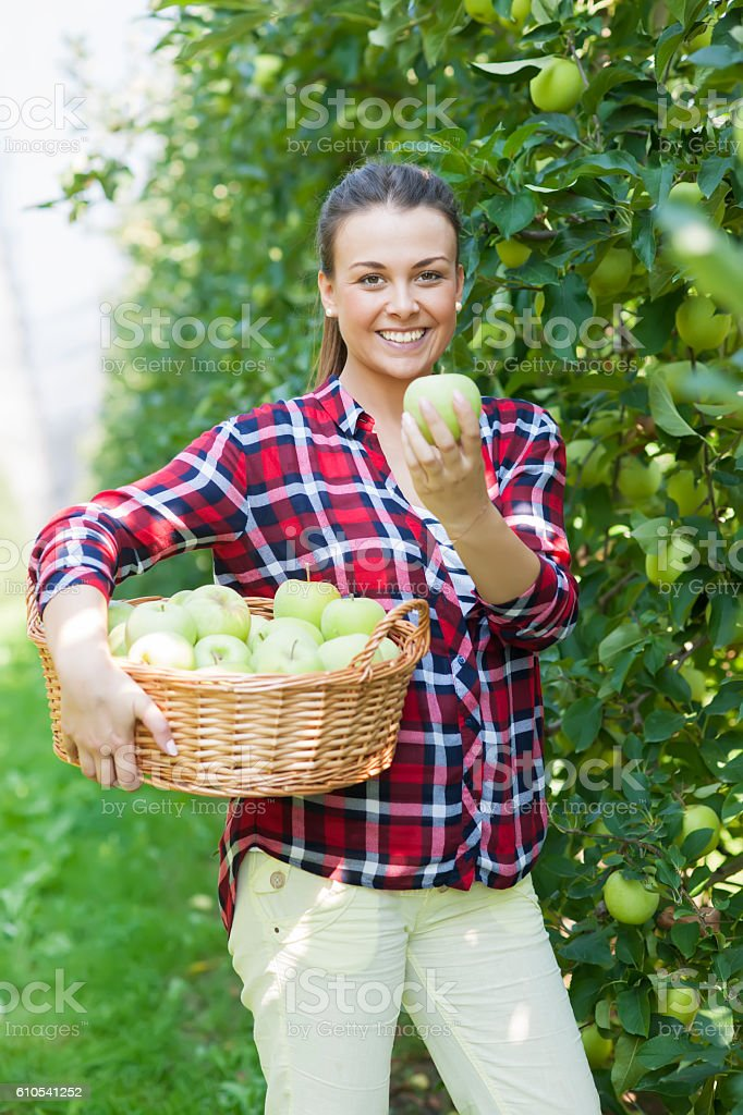 Plantation of granny smith apple stock photo