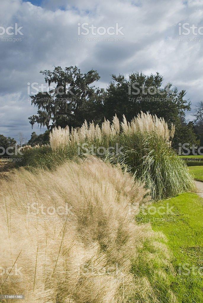 'Plantation scenery (Middleton Place, SC) - VII' stock photo