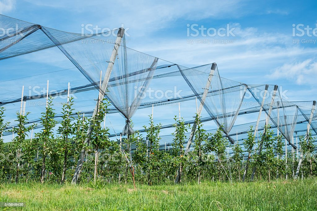 Plantation with apple trees and protection nets stock photo