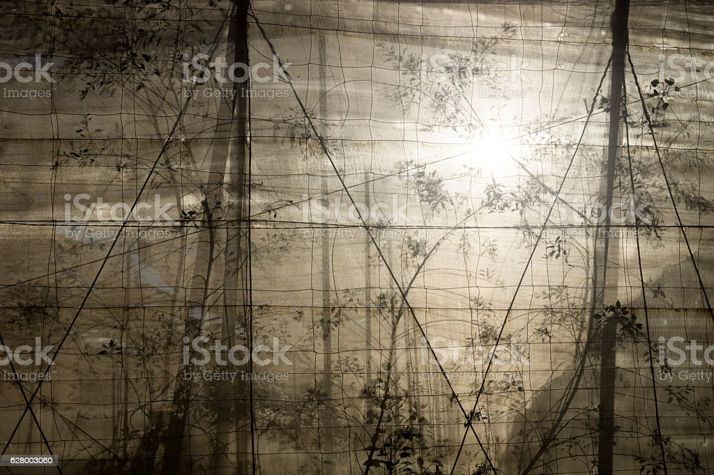 plantation with backlight behind the net stock photo