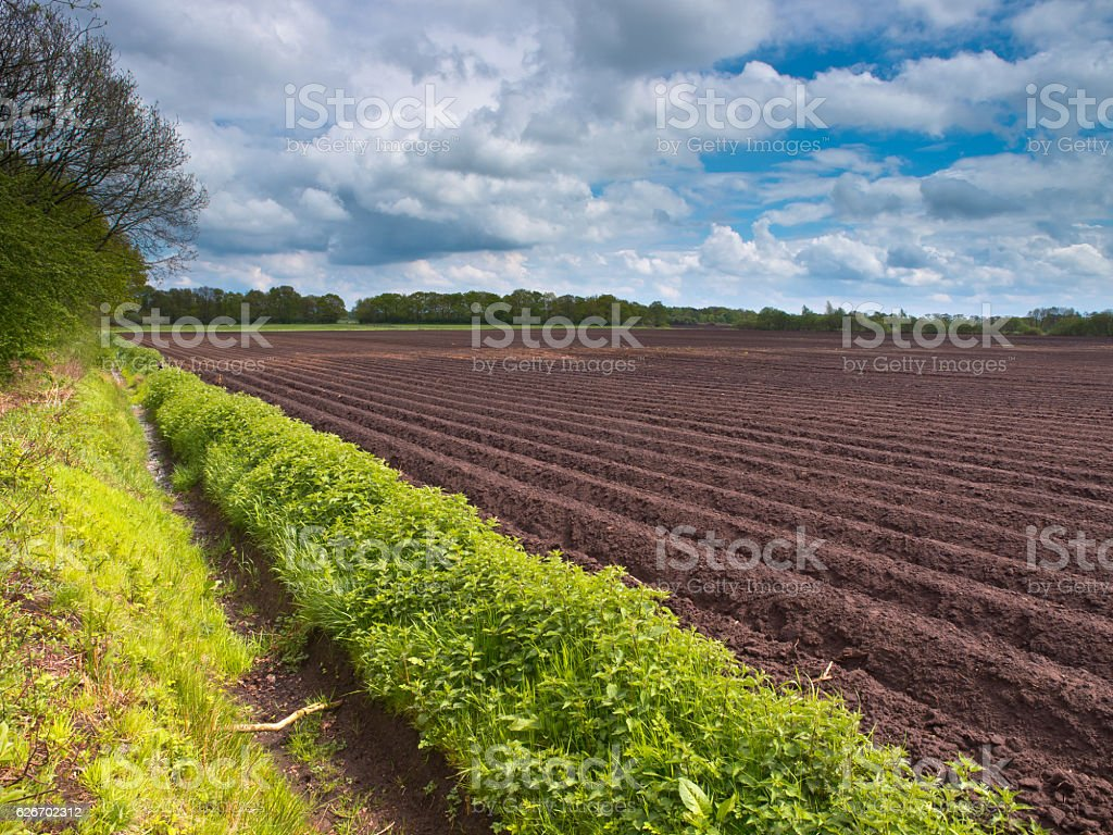 Planted acre stock photo