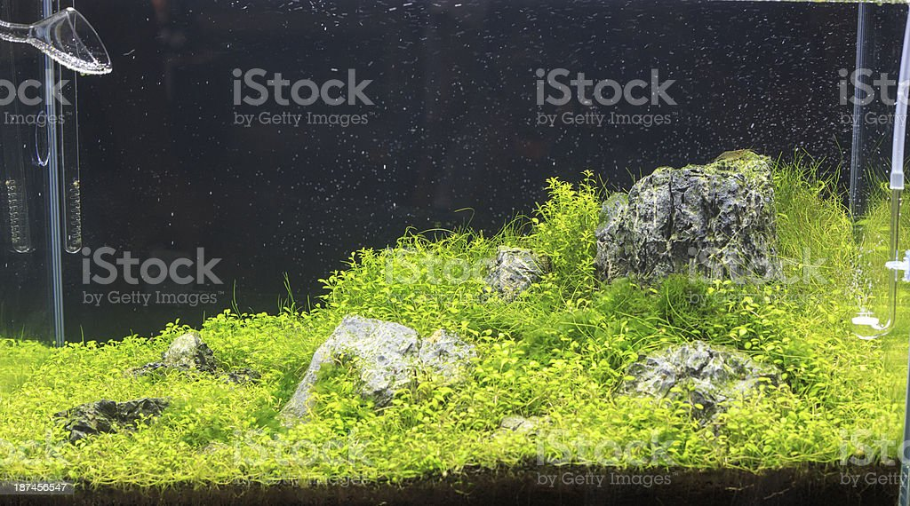 Planted aquarium royalty-free stock photo
