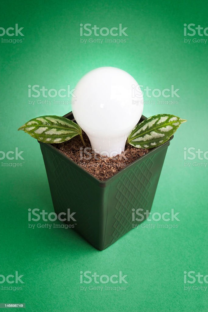 Planted Bulb on Green Background stock photo