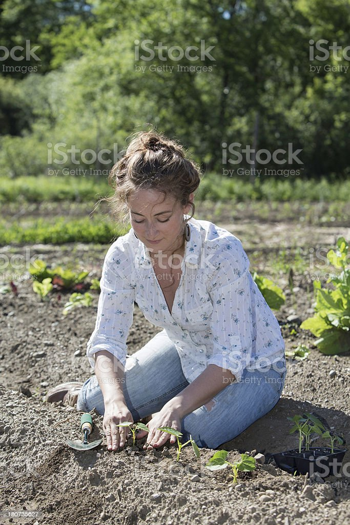 Planted royalty-free stock photo