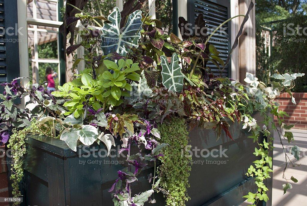 Planter Box royalty-free stock photo