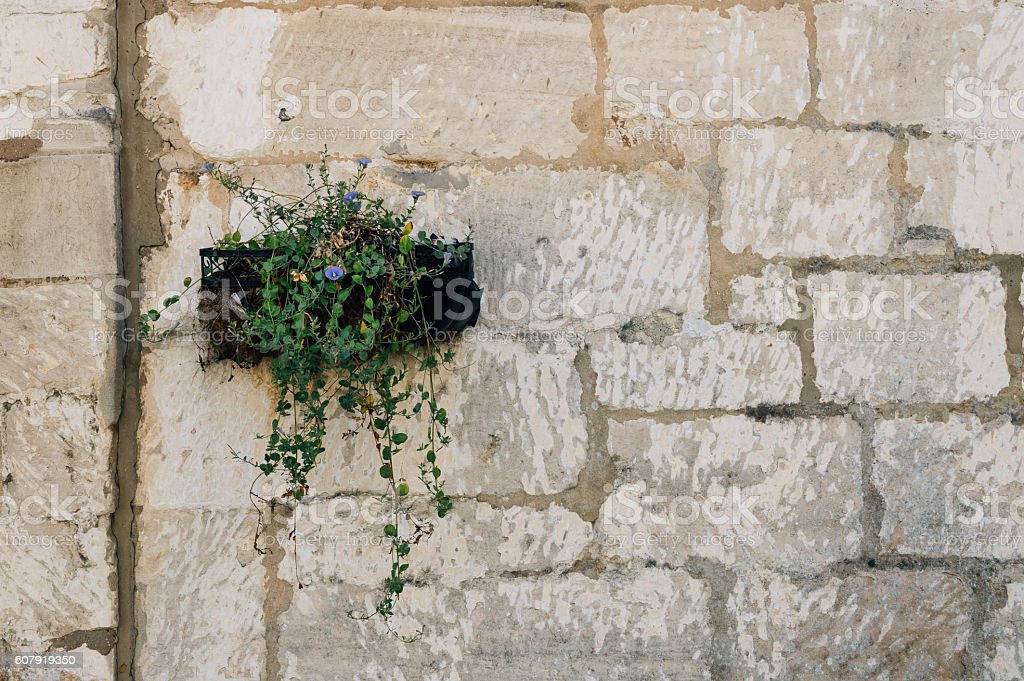 Planter in a stone wall stock photo