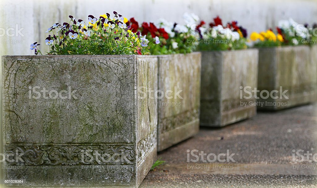 Planter of a flower and the concrete foto de stock libre de derechos