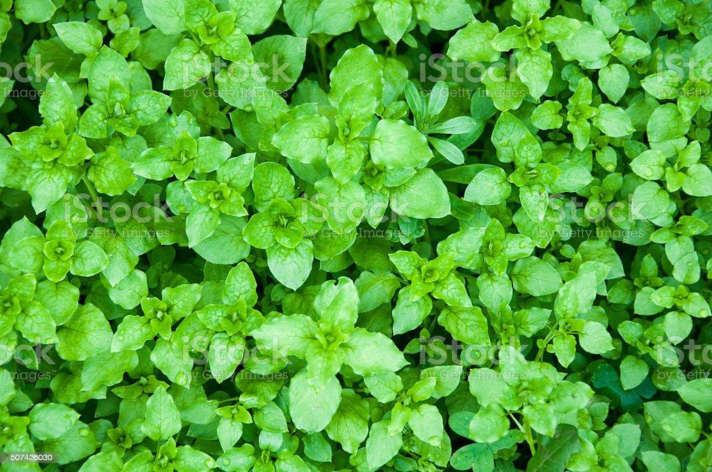 plantes vertes stock photo