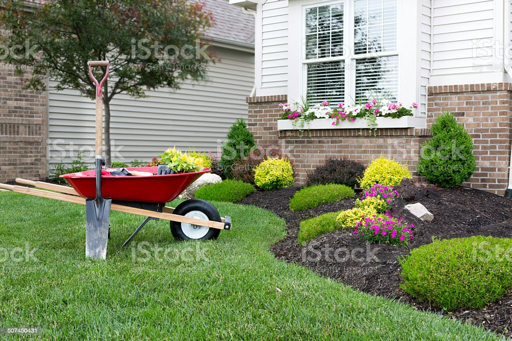 Planting a celosia flower garden around a house stock photo