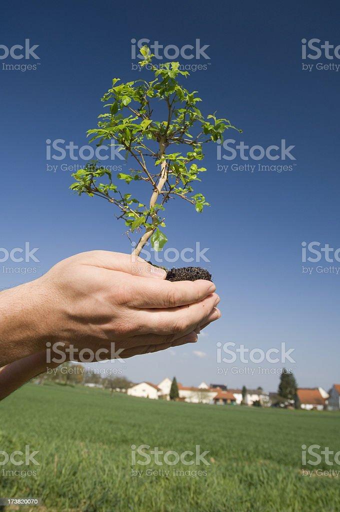Planting a tree royalty-free stock photo