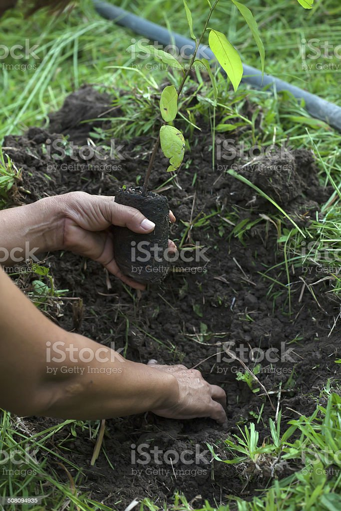 planting a tree with soil stock photo