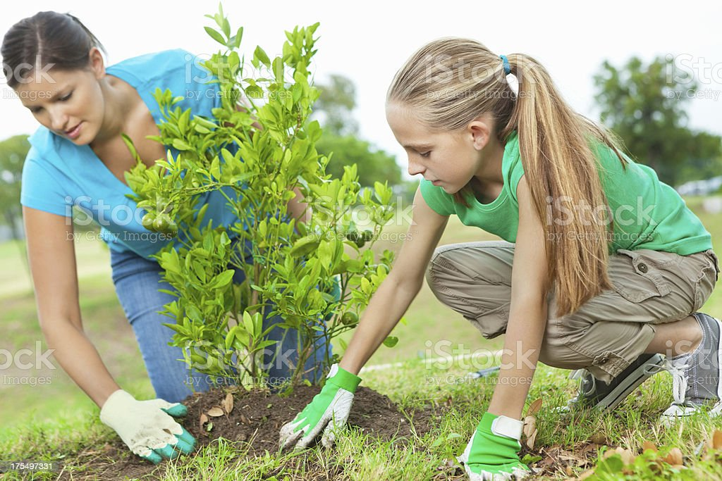 Planting an orange tree together on Arbor day; Environmental conservation stock photo