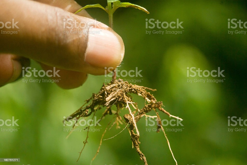 planting and replanting stock photo