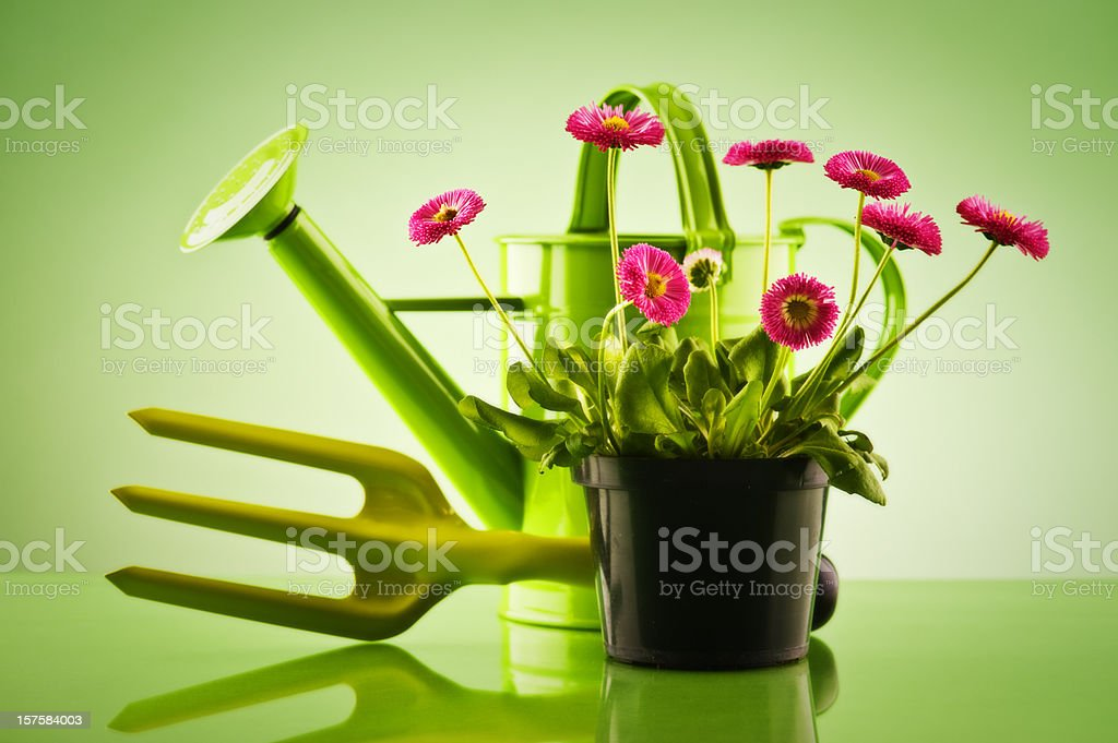 Planting arrangment royalty-free stock photo