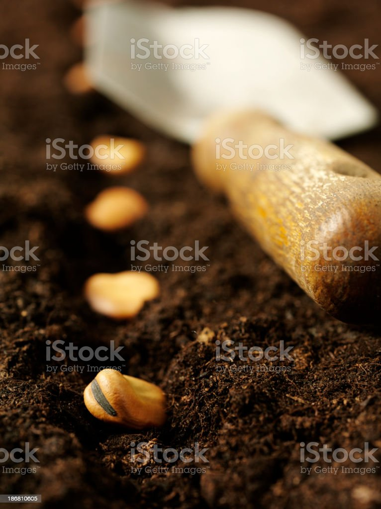 Planting Bulbs in Soil stock photo