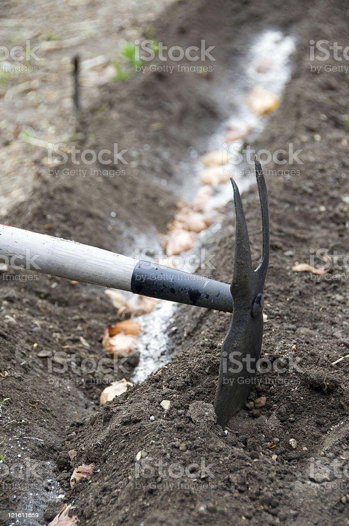 Planting Bulbs royalty-free stock photo