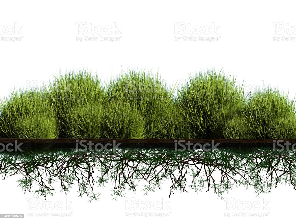 planting bush stock photo
