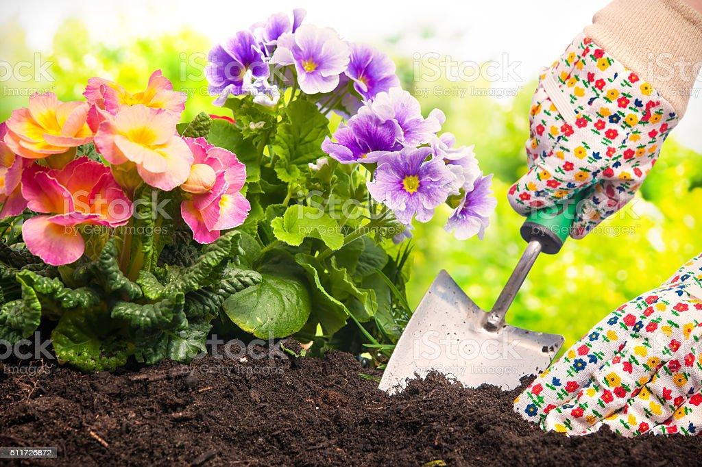 Когда в июне сажать цветы 136