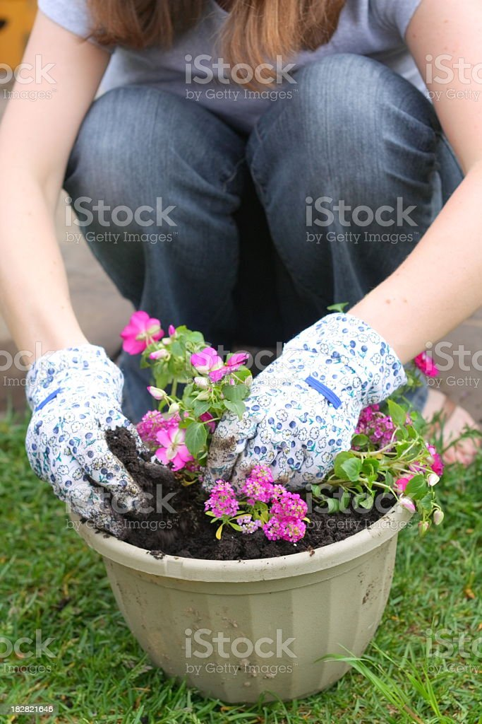 Planting Flowers in Pot royalty-free stock photo