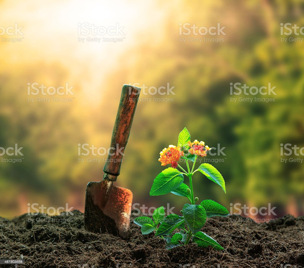 planting flowers plant and gardening too on dirt stock photo