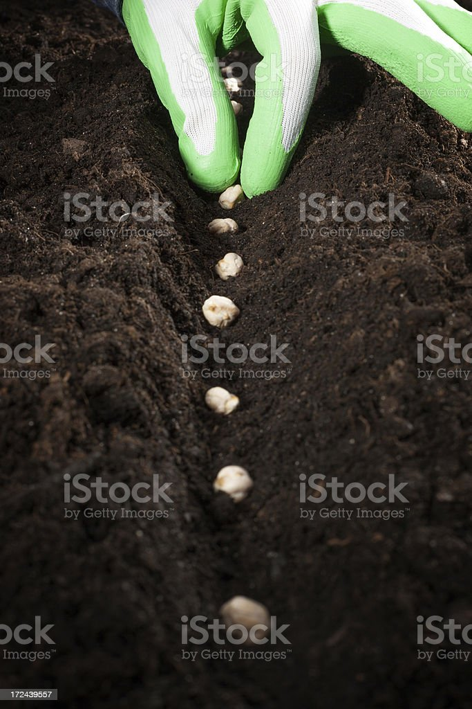 Planting healthy food royalty-free stock photo