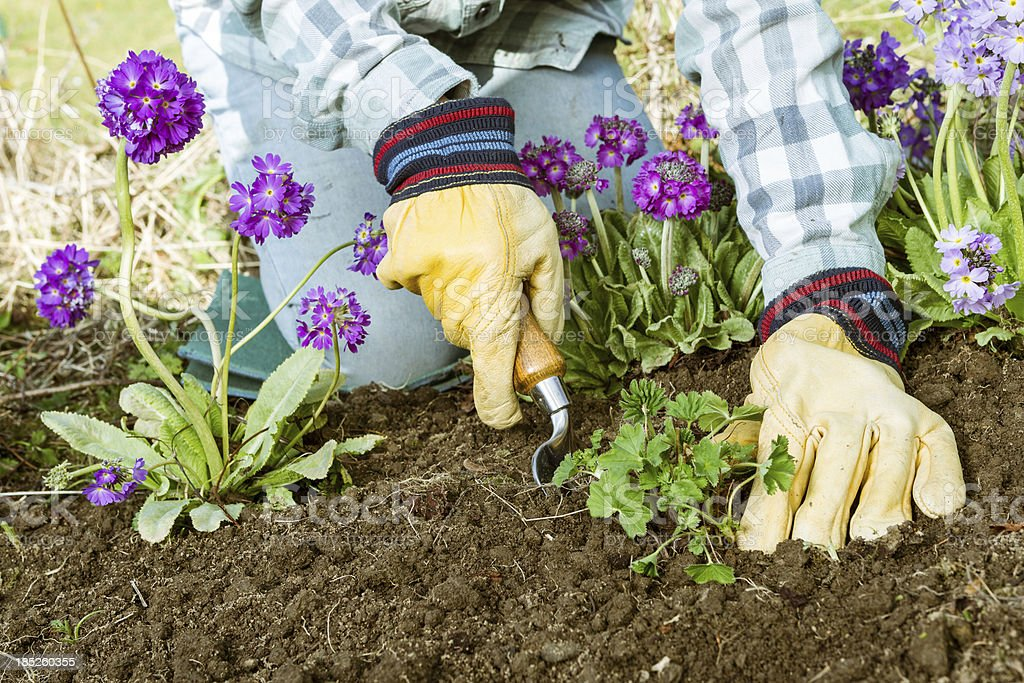 Planting in garden stock photo