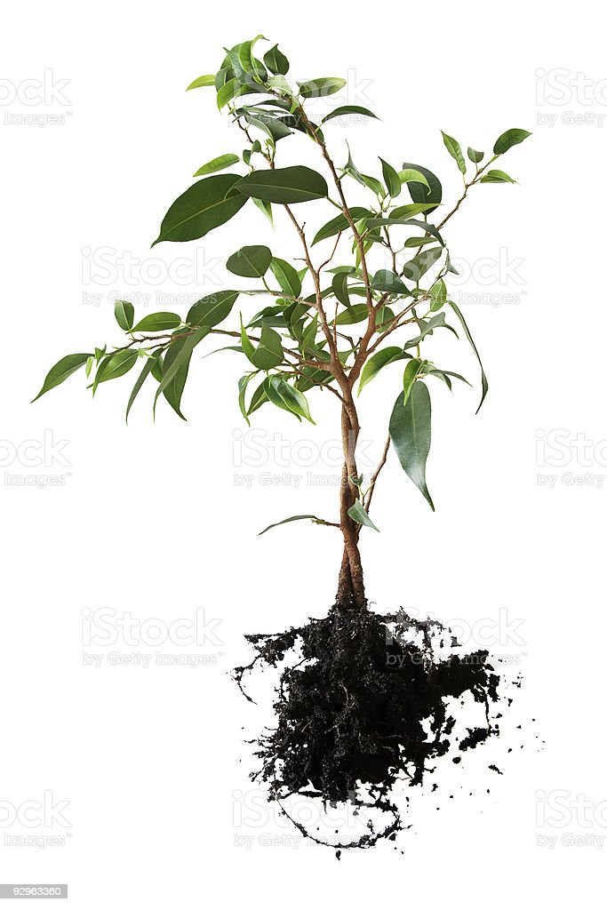 planting little tree royalty-free stock photo