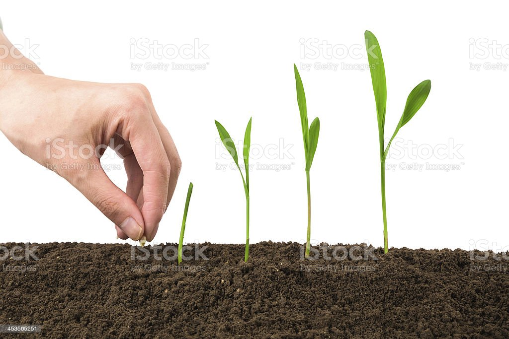 planting new life in spring stock photo